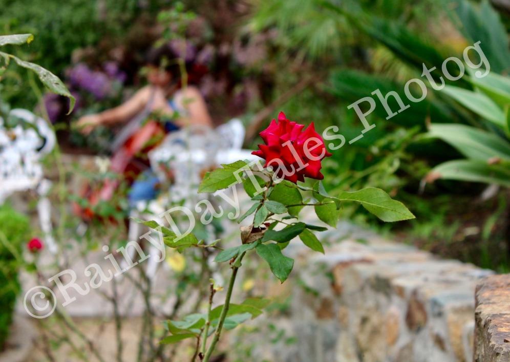 rosecello_watermark